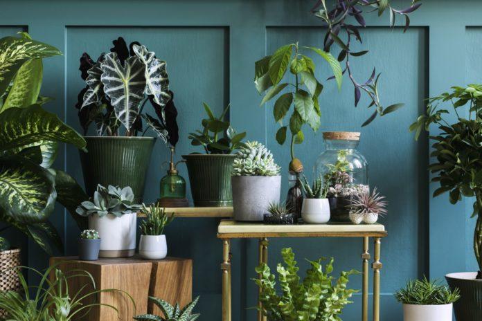 sklepy z roślinami