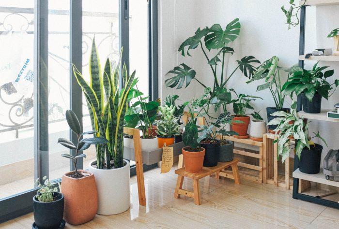 rośliny wolny czas