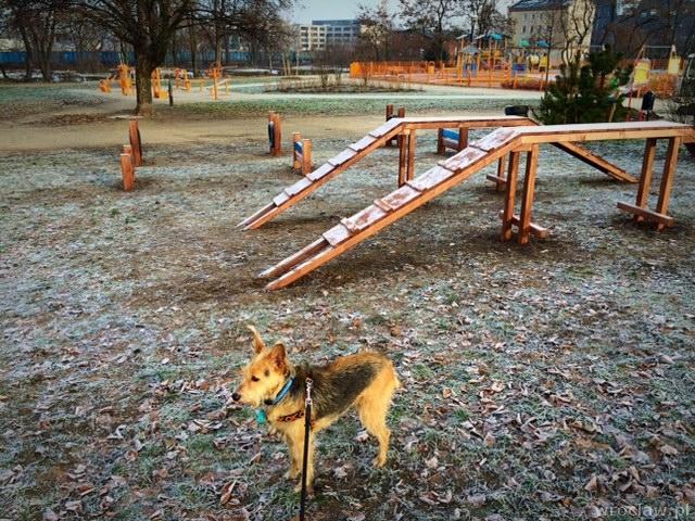 fot. wroclaw.pl