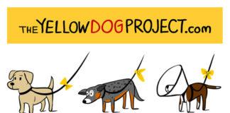 psy z żółtą kokardą